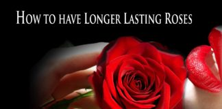 Roses That Last Forever
