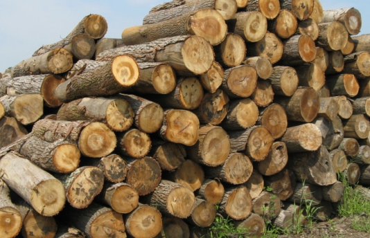 Smart Tips to Arrange Good Quality Firewood